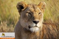 Natur- und Tierfotografie