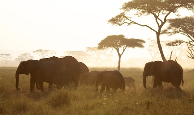 Elephants in Seronera Valley, Serengeti, Tanzania
